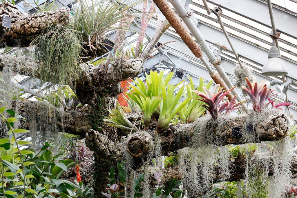 botanische tuin montreal canada detail