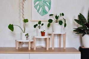 Drie plantentafeltjes