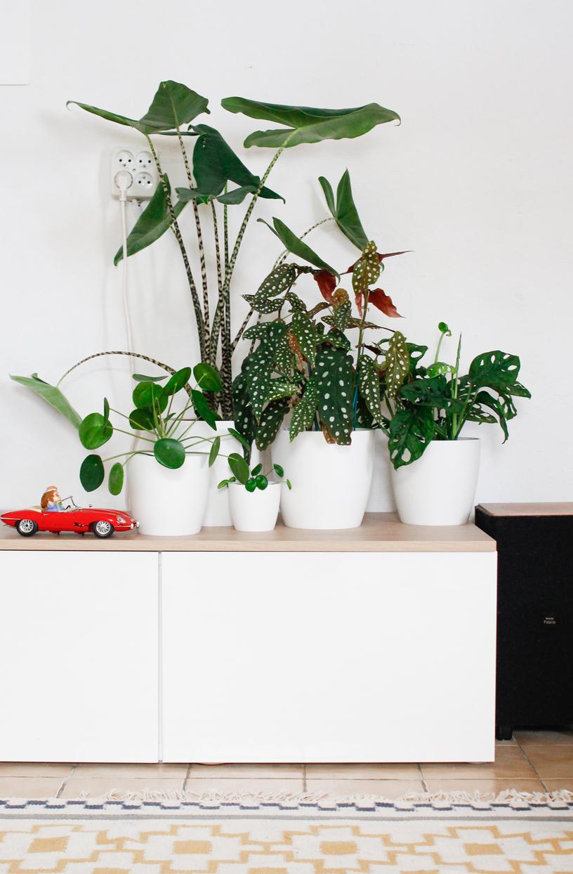 Verschillende groene kamerplanten op een witte kast in woonkamer