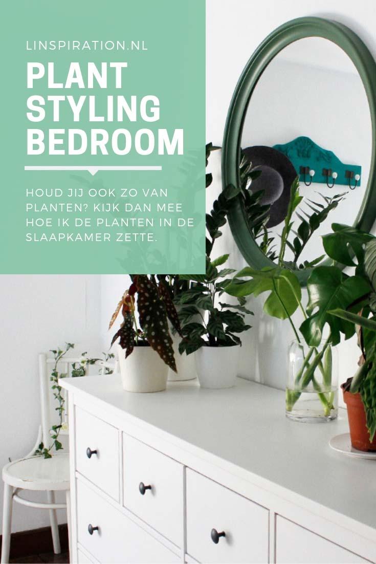 Hoe je planten in je slaapkamer kunt zetten