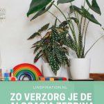 Groene kamerplanten in woonkamer