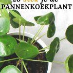Pilea pannenkoekenplant stekken en verzorgen