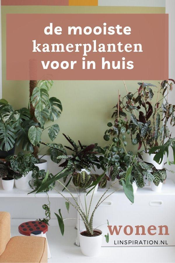 De mooiste kamerplanten voor in huis
