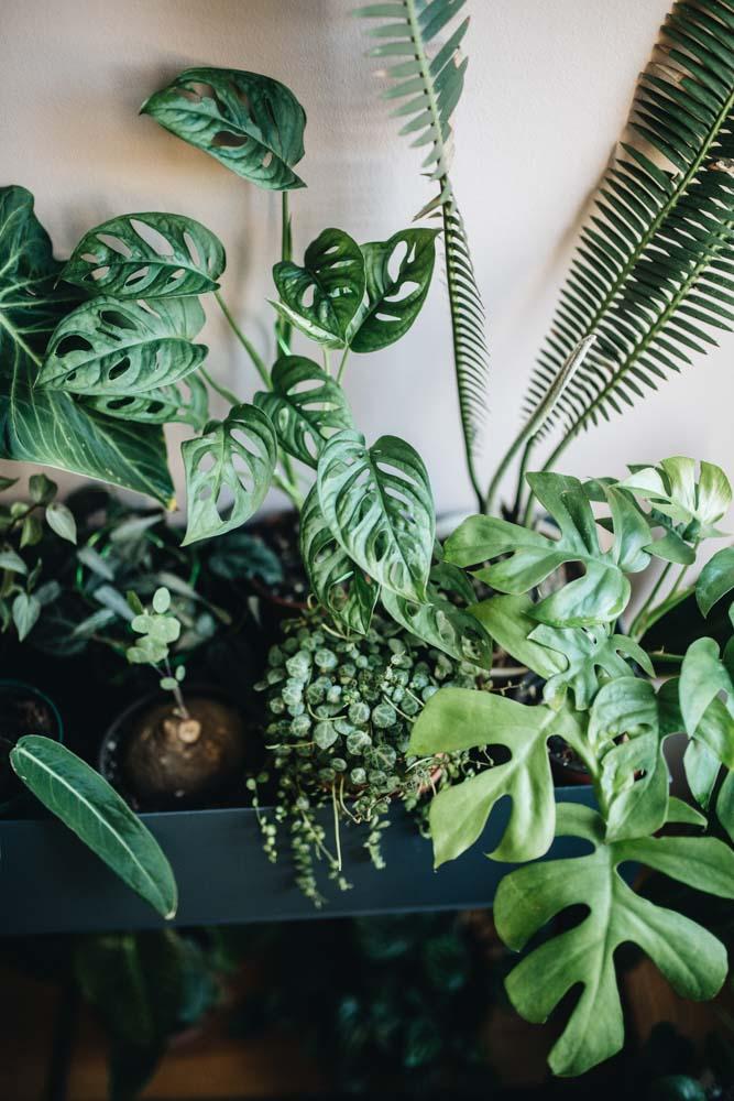 Planten in een kast